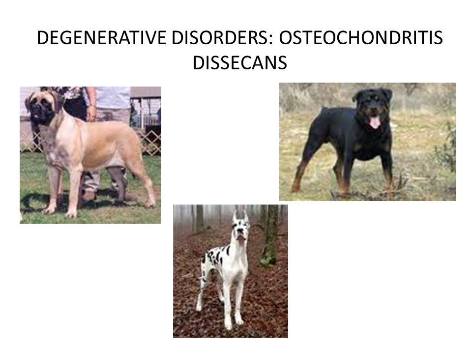 DEGENERATIVE DISORDERS: OSTEOCHONDRITIS DISSECANS