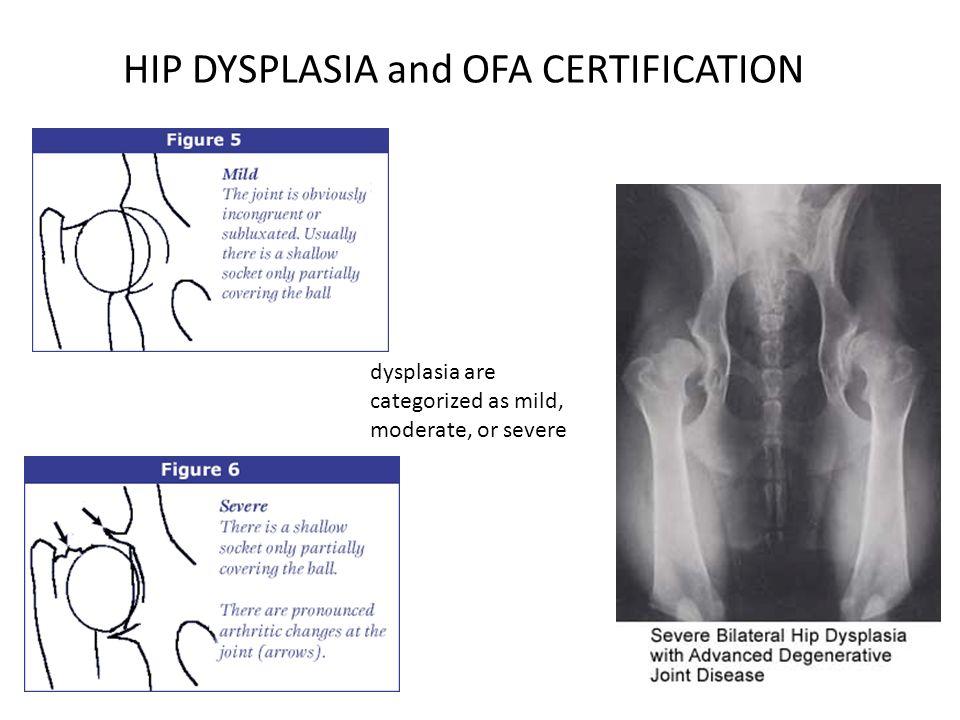 HIP DYSPLASIA TREATMENT NSAIDs NEUTRICEUTICALS/CHONDROPROTECTIVE AGENTS
