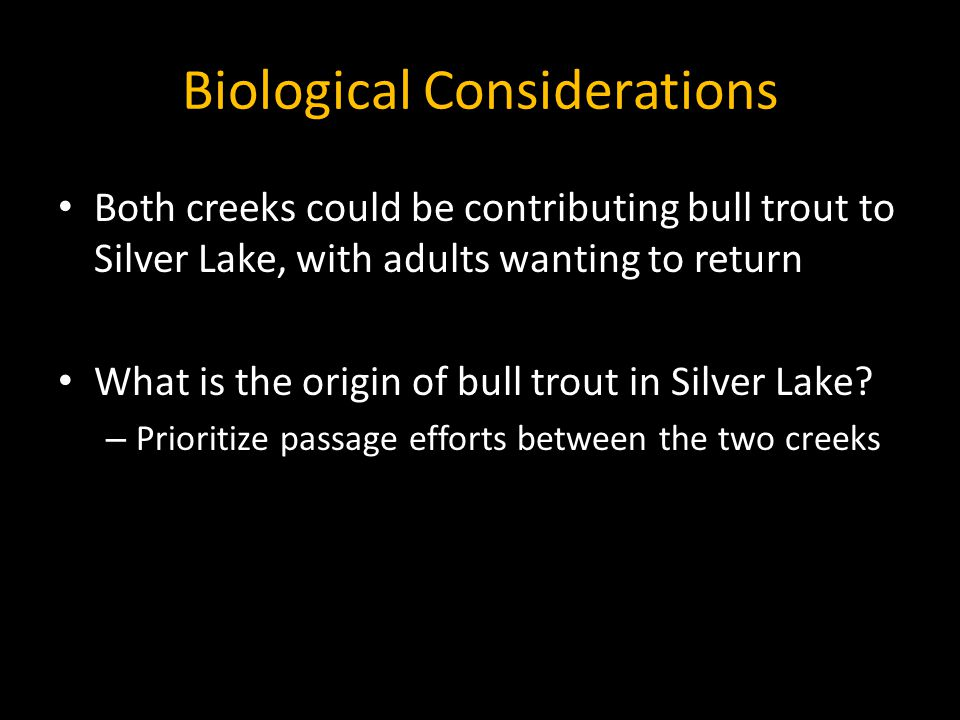 Biological Considerations Both creeks could be contributing bull trout to Silver Lake, with adults wanting to return What is the origin of bull trout in Silver Lake.