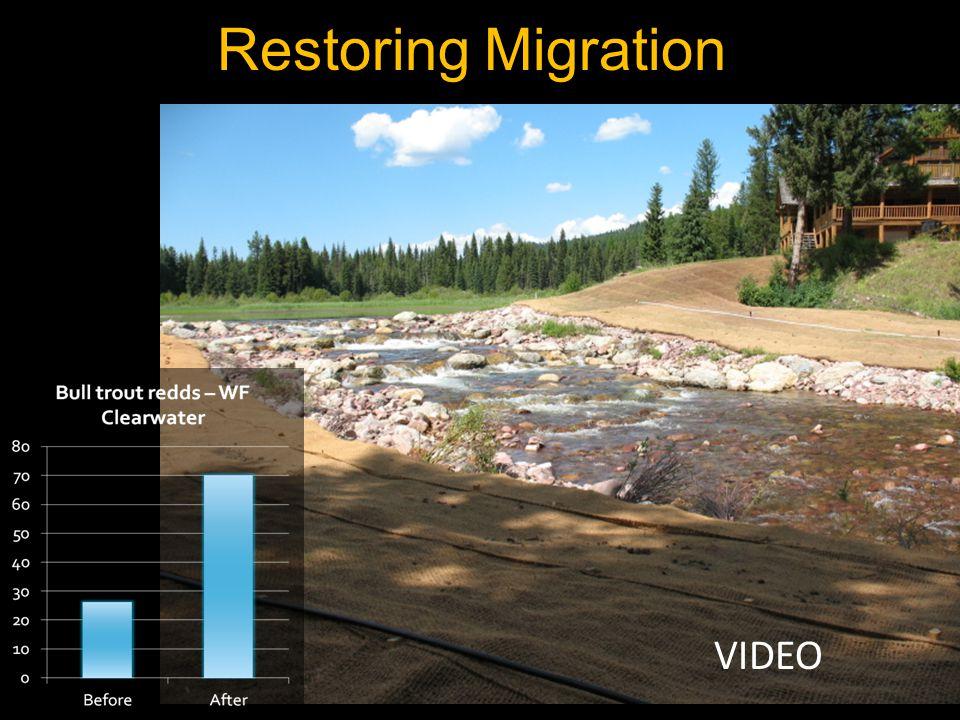 Restoring Migration VIDEO