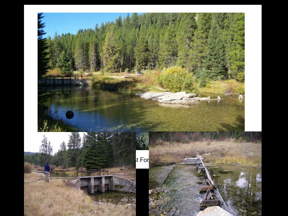 Biological Considerations Reservoir population Canal salvage history EF Rock Cr.