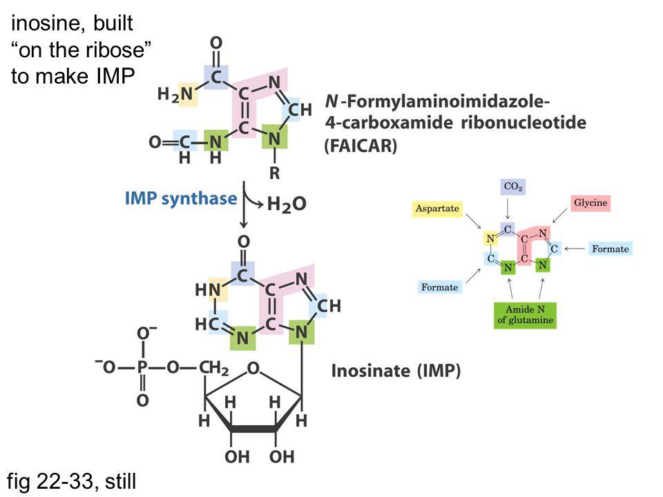 "fig 22-33, still inosine, built ""on the ribose"" to make IMP"