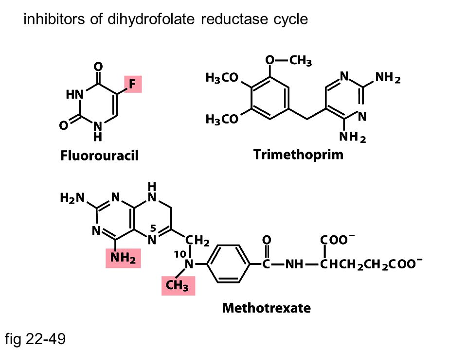 fig 22-49 inhibitors of dihydrofolate reductase cycle
