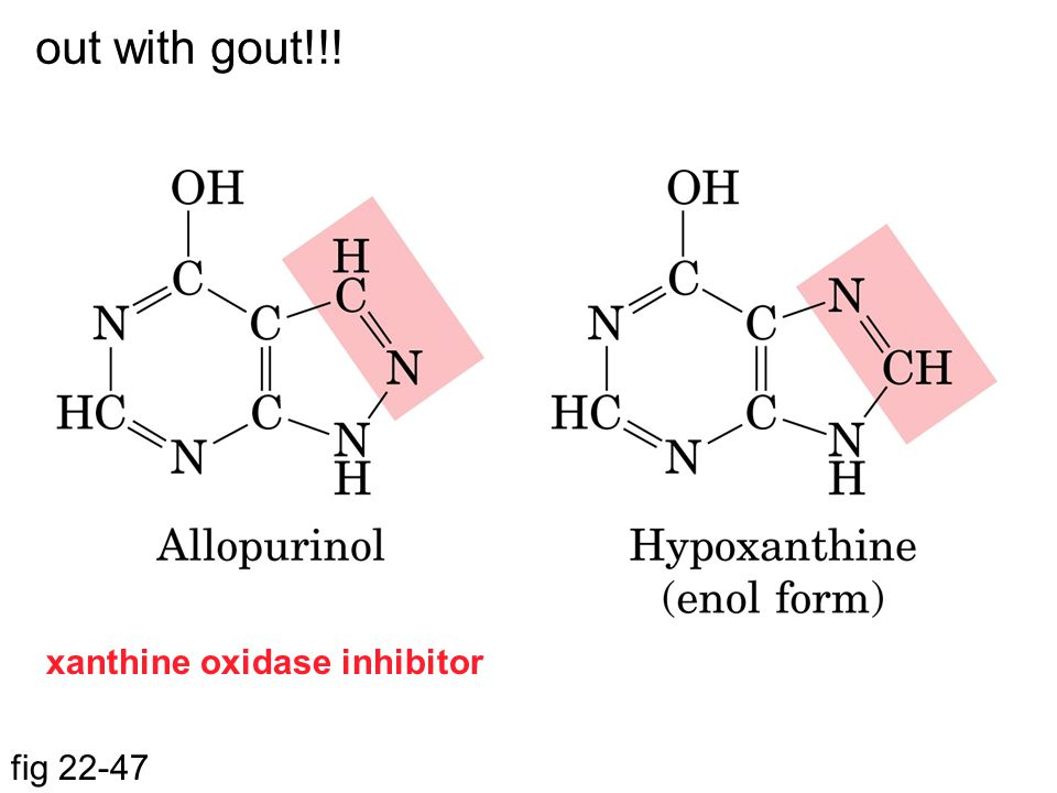 fig 22-47 out with gout!!! xanthine oxidase inhibitor