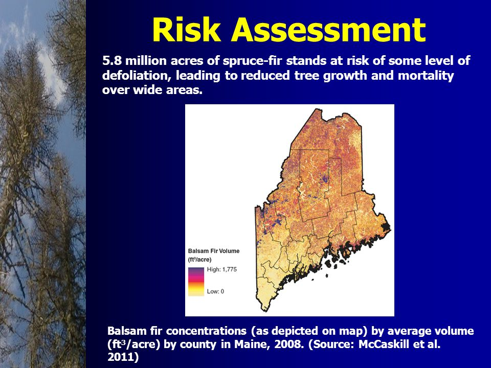 Risk Assessment Balsam fir concentrations (as depicted on map) by average volume (ft 3 /acre) by county in Maine, 2008.