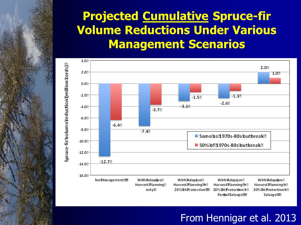 Projected Cumulative Spruce-fir Volume Reductions Under Various Management Scenarios From Hennigar et al.