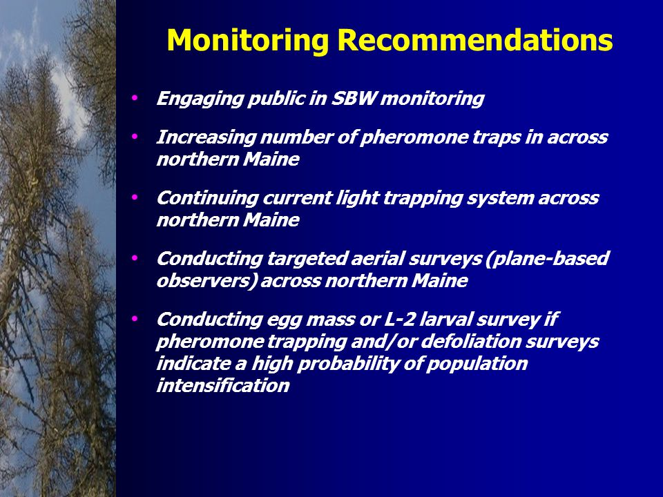 Monitoring Recommendations Engaging public in SBW monitoring Increasing number of pheromone traps in across northern Maine Continuing current light trapping system across northern Maine Conducting targeted aerial surveys (plane-based observers) across northern Maine Conducting egg mass or L-2 larval survey if pheromone trapping and/or defoliation surveys indicate a high probability of population intensification