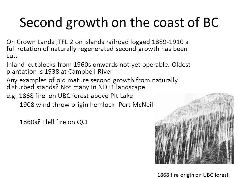 Second growth on the coast of BC On Crown Lands ;TFL 2 on islands railroad logged 1889-1910 a full rotation of naturally regenerated second growth has been cut.