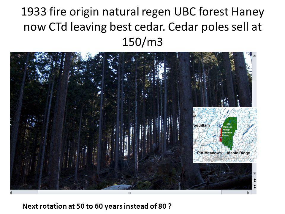 1933 fire origin natural regen UBC forest Haney now CTd leaving best cedar.