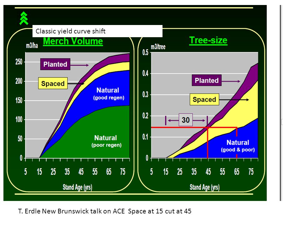 T. Erdle New Brunswick talk on ACE Space at 15 cut at 45 Classic yield curve shift