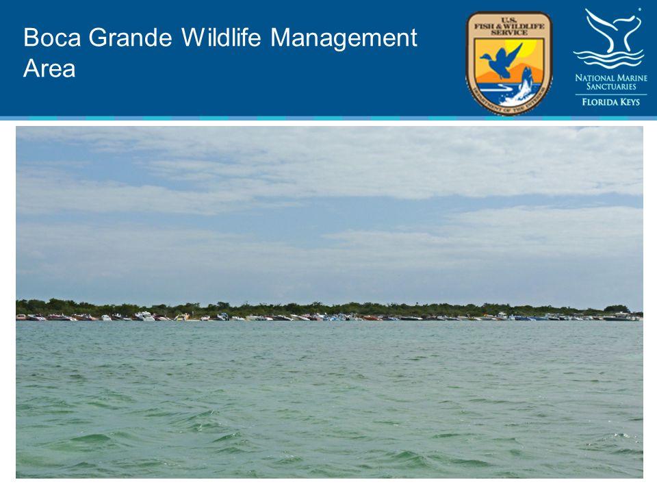 Boca Grande Wildlife Management Area