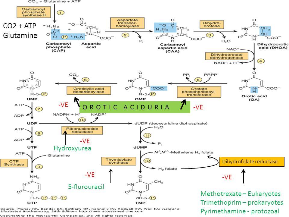 5-flurouracil -VE Dihydrofolate reductase Methotrexate – Eukaryotes Trimethoprim – prokaryotes Pyrimethamine - protozoal -VE Hydroxyurea -VE OROTIC ACIDURIA -VE CO2 + ATP Glutamine