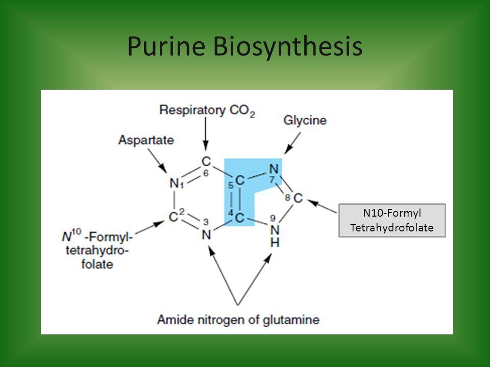 Purine Biosynthesis N10-Formyl Tetrahydrofolate