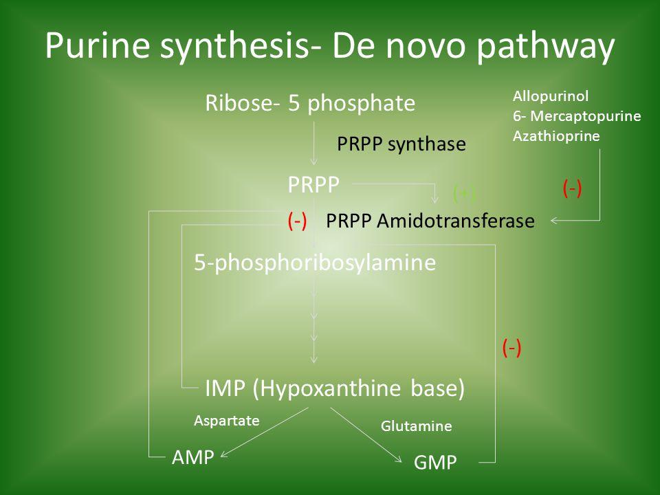 Ribose- 5 phosphate Purine synthesis- De novo pathway PRPP 5-phosphoribosylamine IMP (Hypoxanthine base) AMP GMP PRPP synthase PRPP Amidotransferase (-) Allopurinol 6- Mercaptopurine Azathioprine (-) (+) Glutamine Aspartate