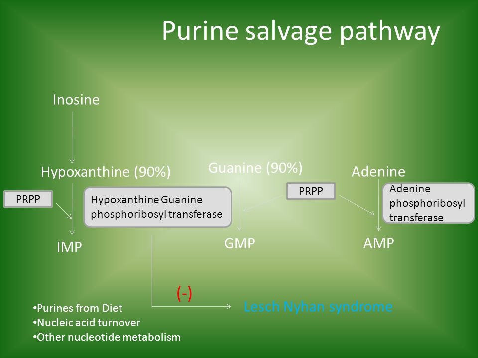 Purine salvage pathway Adenine Inosine Guanine (90%) Hypoxanthine (90%) IMP GMP AMP Hypoxanthine Guanine phosphoribosyl transferase Adenine phosphoribosyl transferase (-) Lesch Nyhan syndrome Purines from Diet Nucleic acid turnover Other nucleotide metabolism PRPP