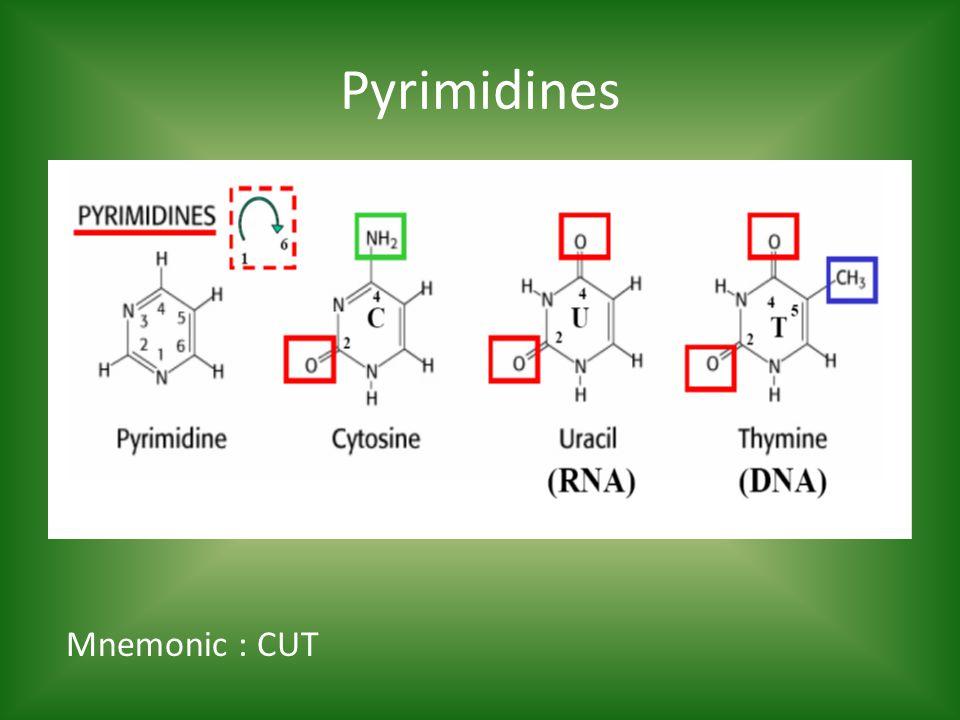 Pyrimidines Mnemonic : CUT