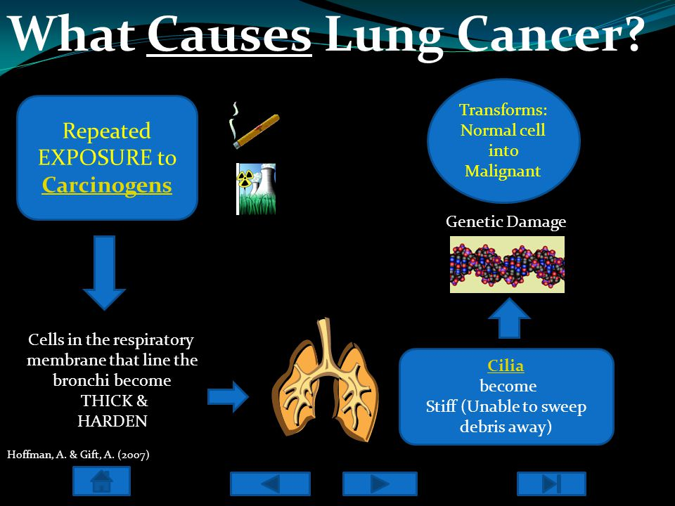 What Causes Lung Cancer? Repeated EXPOSURE to Carcinogens Transforms: Normal cell into Malignant Clip Art, 2010 Hoffman, A. & Gift, A. (2007) Cells in