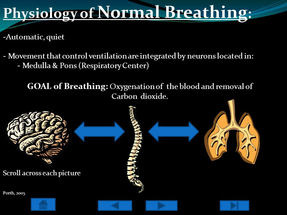 Neural Stimulation Neural Pathways for breathing receive signals from receptors in: - Lungs - Skin - Muscles - Joints These receptors are called Mechanoreceptors - Stretch receptors in (trachea, bronchi) are stimulated with lung expansion - Irritant receptors (epithelium of airways) stimulated by smoke, pollens, fungi, cold air, & mold - Movement of lower and upper extremities stimulate receptors in muscles & joints - Painful stimuli will elicit mechanoreceptors within the skin Jantarakupt, P.