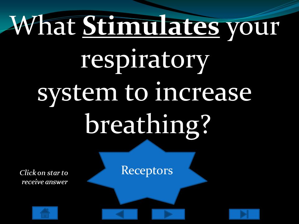 1)Chemoreceptors - Peripheral chemoreceptors: Located in the carotid and aortic bodiesPeripheral chemoreceptors: - Central chemoreceptors: Located in the Respiratory center in the Medulla & ponsCentral chemoreceptors 2) Lung & Chest wall Receptors - Stretch (smooth muscle) Stretch - Irritant (Airway of epithelial cells) Irritant - Juxtacapillary or J receptors (alveolar wall) Juxtacapillary or J receptors Jantarakupt, P.
