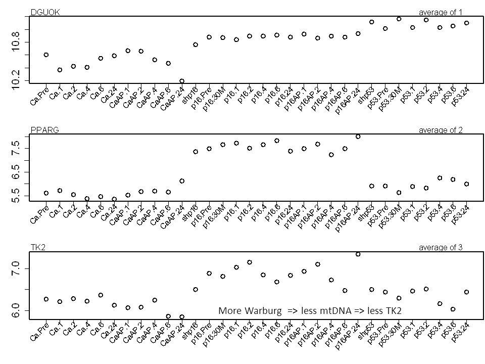 More Warburg => less mtDNA => less TK2