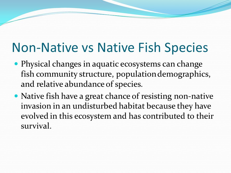 Non-Native vs Native Fish Species Physical changes in aquatic ecosystems can change fish community structure, population demographics, and relative abundance of species.
