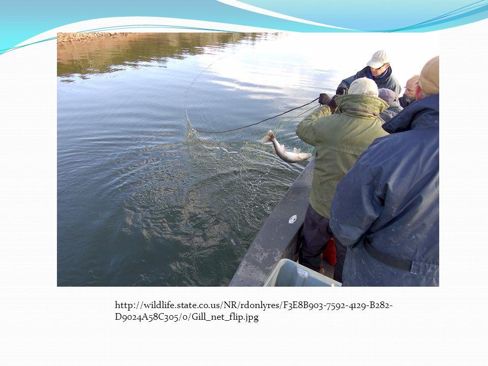http://wildlife.state.co.us/NR/rdonlyres/F3E8B903-7592-4129-B282- D9024A58C305/0/Gill_net_flip.jpg