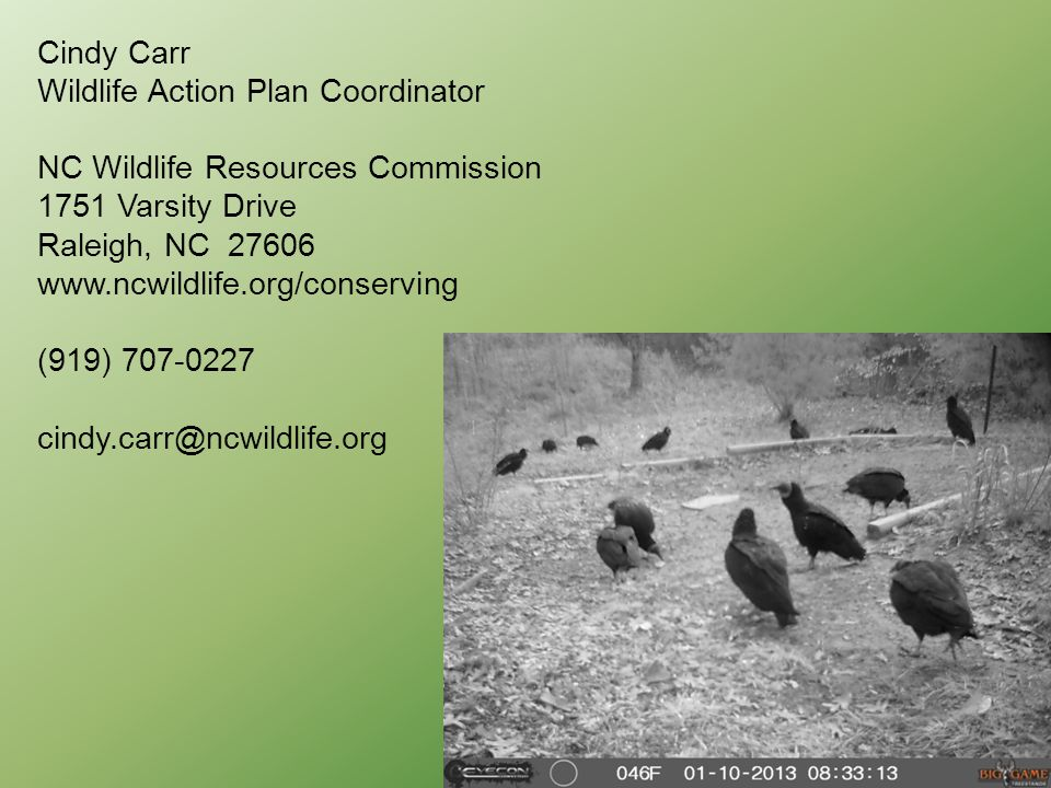 Cindy Carr Wildlife Action Plan Coordinator NC Wildlife Resources Commission 1751 Varsity Drive Raleigh, NC 27606 www.ncwildlife.org/conserving (919) 707-0227 cindy.carr@ncwildlife.org