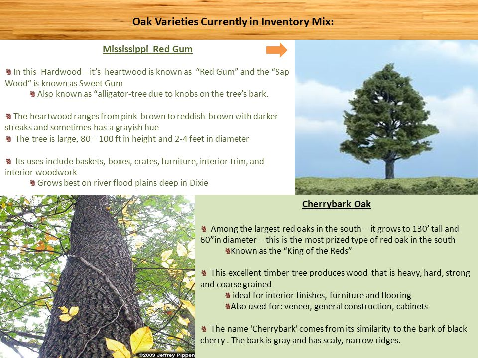 POST OAK: Also called Iron Oak A Medium sized tree abundant throughout Southeastern US Slow growing, drought resistant, and very resistant to decay Wood is durable in contact with soil and used widely for fence posts, hence the name.