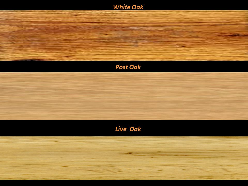 Red Oak Cherrybark Oak Mississippi Red Gum Red Oak