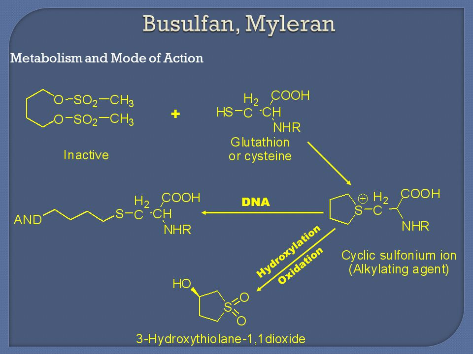Metabolism and Mode of Action DNA Hydroxylation Oxidation +