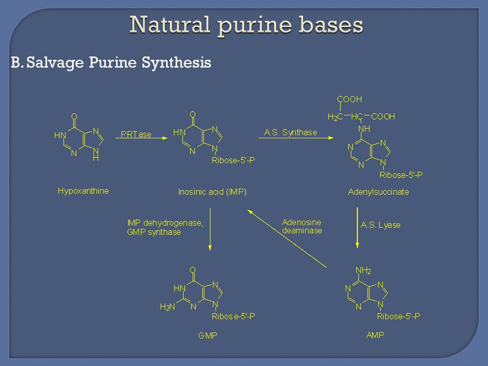B.Salvage Purine Synthesis