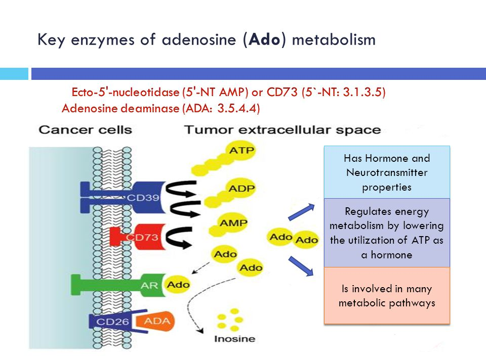 Key enzymes of adenosine (Ado) metabolism Has Hormone and Neurotransmitter properties Regulates energy metabolism by lowering the utilization of ATP as a hormone Is involved in many metabolic pathways