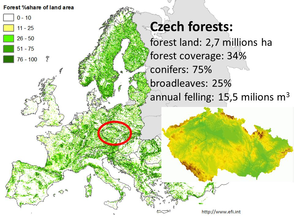 Czech forests: forest land: 2,7 millions ha forest coverage: 34% conifers: 75% broadleaves: 25% annual felling: 15,5 milions m 3