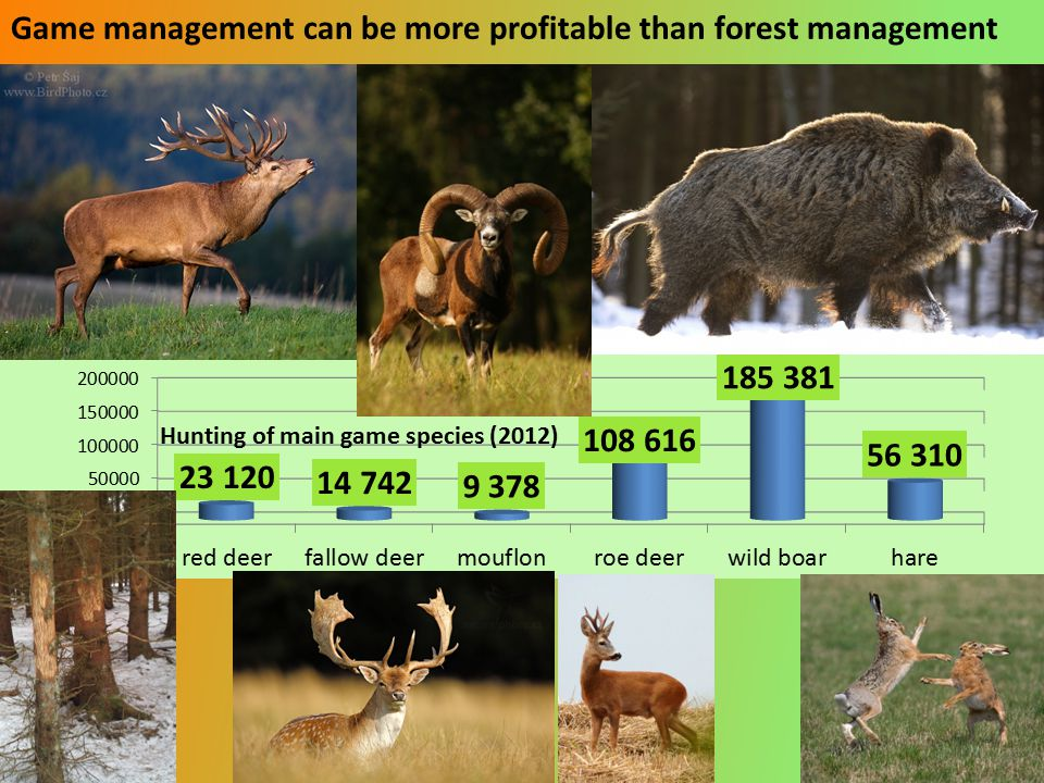 Game management can be more profitable than forest management