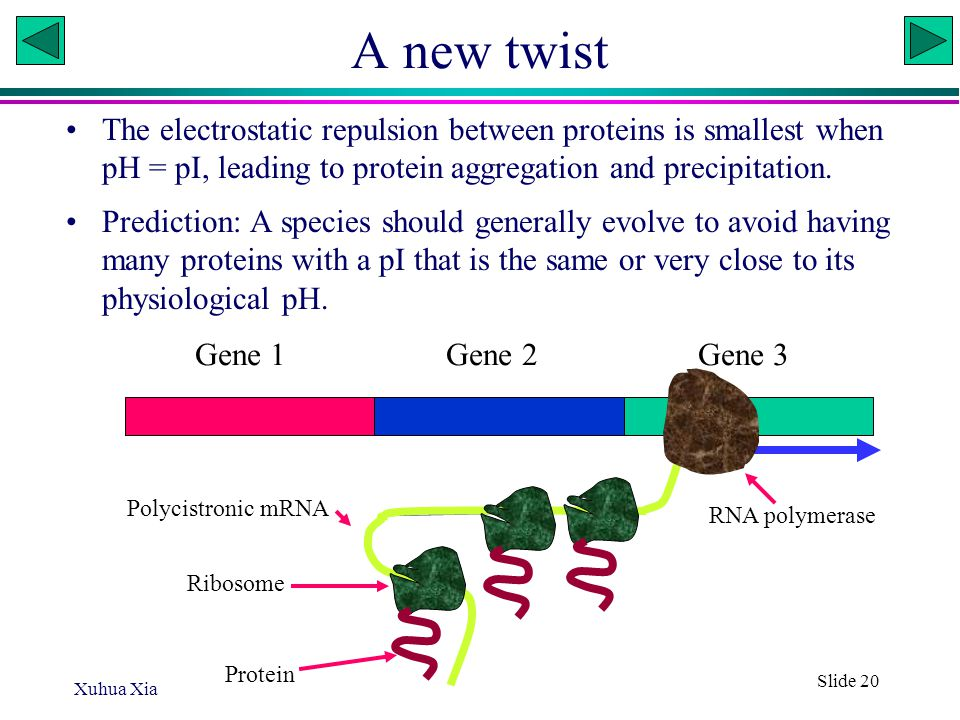 Xuhua Xia Slide 20 A new twist The electrostatic repulsion between proteins is smallest when pH = pI, leading to protein aggregation and precipitation.