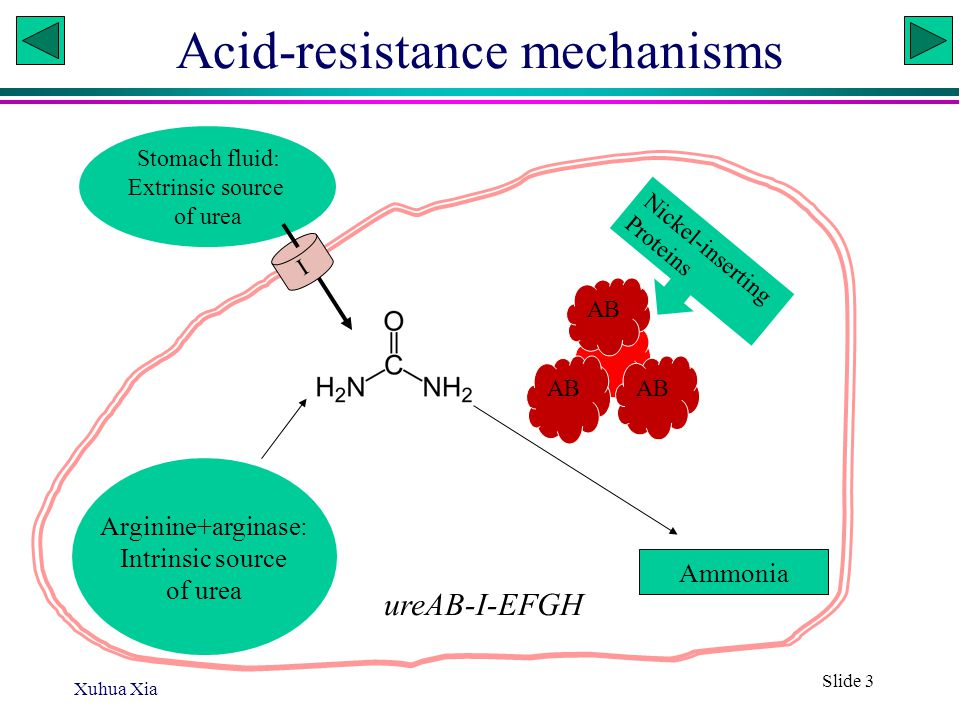 Xuhua Xia Slide 4 The importance of the membrane Protection agaisnt acute exposure to low pH Urease-negative strains of H.