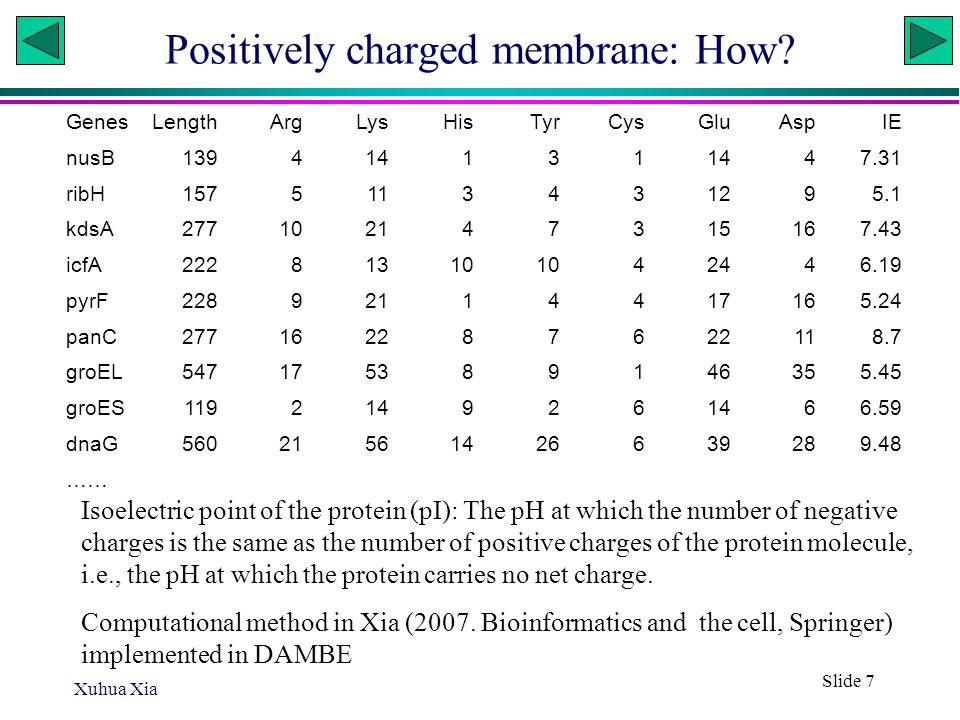 Xuhua Xia Slide 7 Positively charged membrane: How.