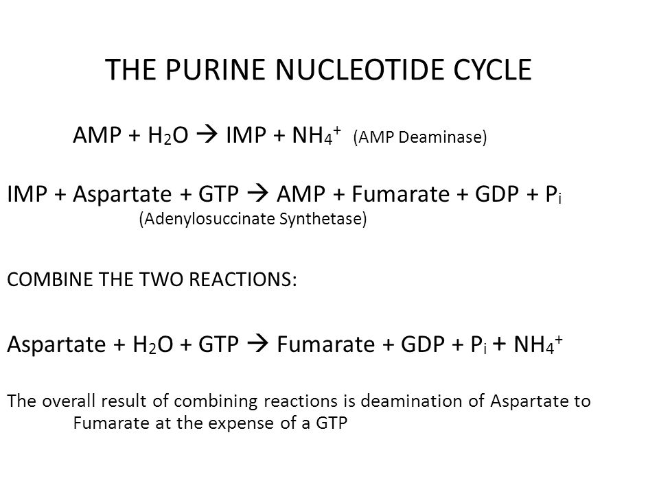 AMP + H 2 O  IMP + NH 4 + (AMP Deaminase) IMP + Aspartate + GTP  AMP + Fumarate + GDP + P i (Adenylosuccinate Synthetase) COMBINE THE TWO REACTIONS: