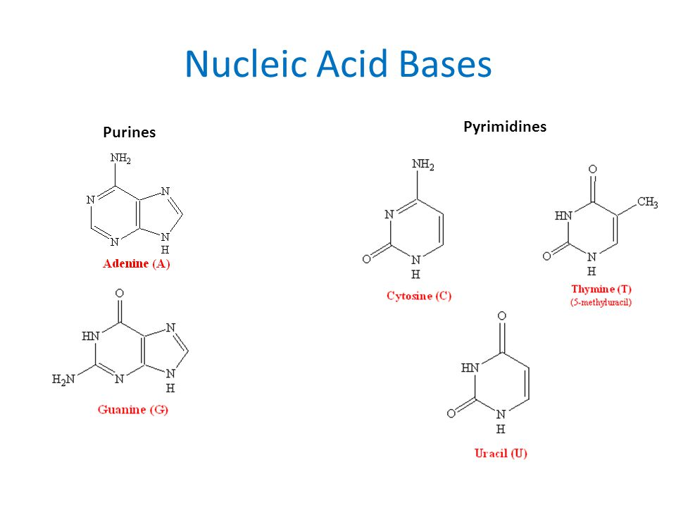 Nucleic Acid Bases Purines Pyrimidines