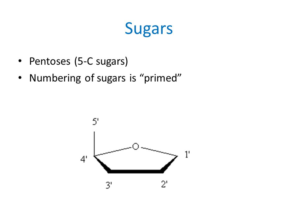 "Sugars Pentoses (5-C sugars) Numbering of sugars is ""primed"""