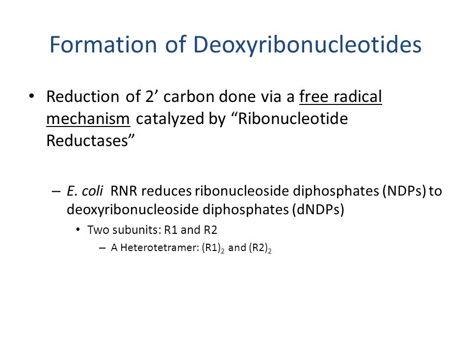 "Formation of Deoxyribonucleotides Reduction of 2' carbon done via a free radical mechanism catalyzed by ""Ribonucleotide Reductases"" – E. coli RNR redu"