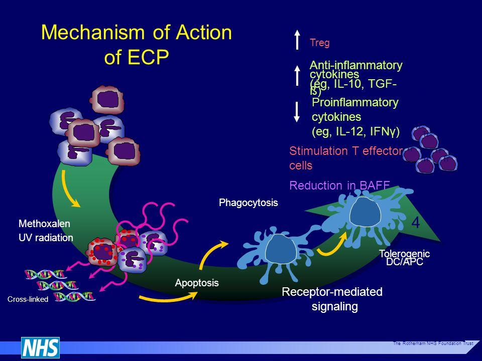 Mechanism of Action of ECP Methoxalen UV radiation Cross-linked DNA Leukocytes Apoptosis Phagocytosis Tolerogenic DC/APC Tr Anti-inflammatory cytokine
