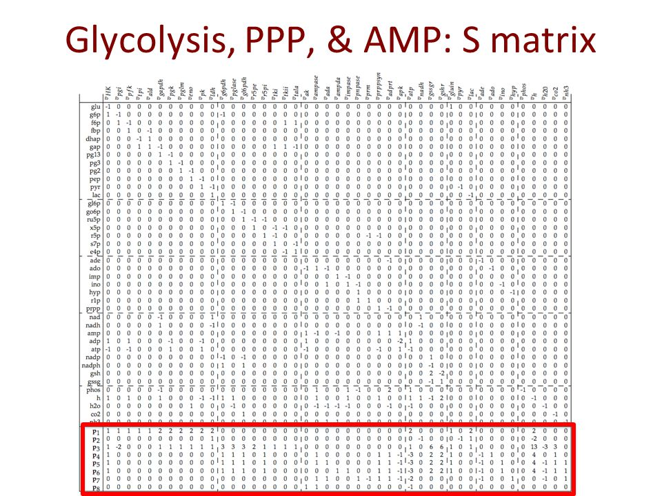 Glycolysis, PPP, & AMP: S matrix