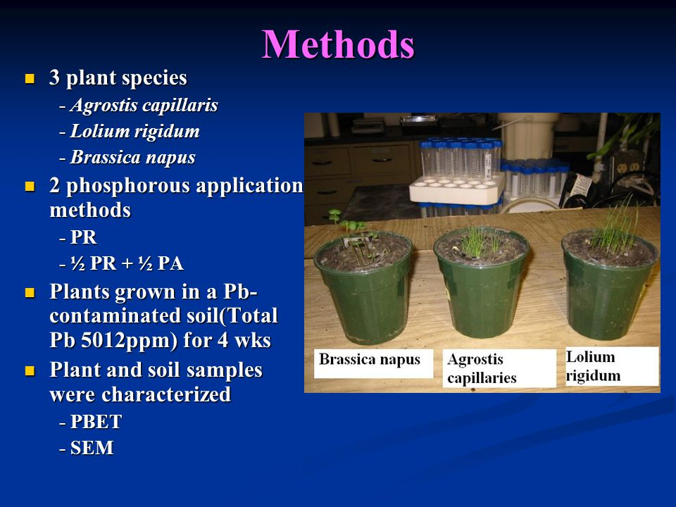 Methods 3 plant species 3 plant species - Agrostis capillaris - Agrostis capillaris - Lolium rigidum - Lolium rigidum - Brassica napus - Brassica napus 2 phosphorous application methods 2 phosphorous application methods - PR - PR - ½ PR + ½ PA - ½ PR + ½ PA Plants grown in a Pb- contaminated soil(Total Pb 5012ppm) for 4 wks Plants grown in a Pb- contaminated soil(Total Pb 5012ppm) for 4 wks Plant and soil samples were characterized Plant and soil samples were characterized - PBET - PBET - SEM - SEM