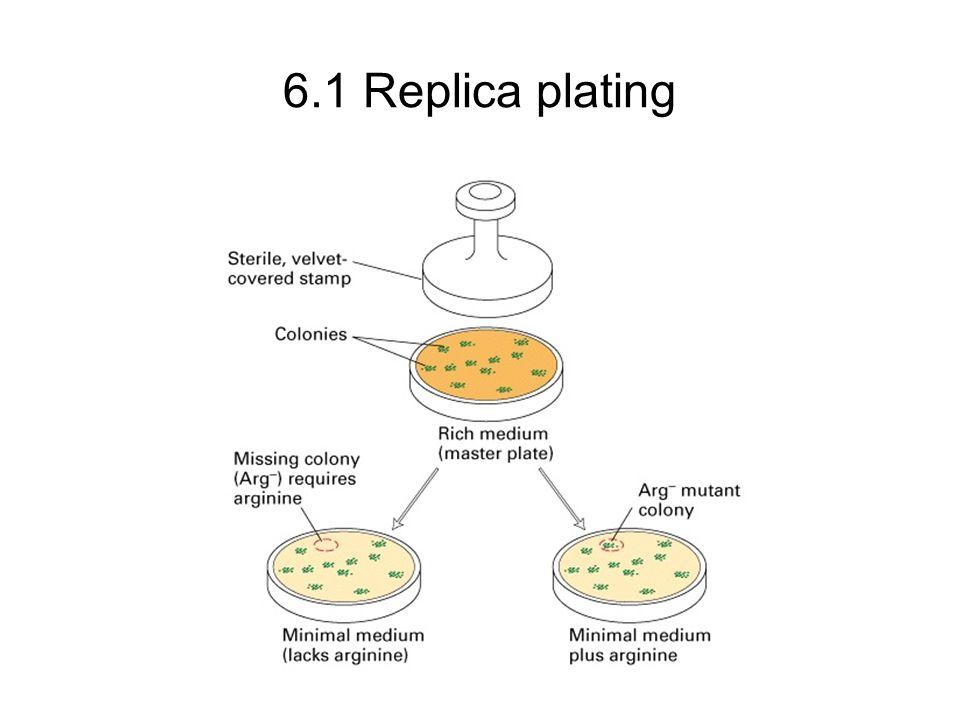 6.1 Replica plating
