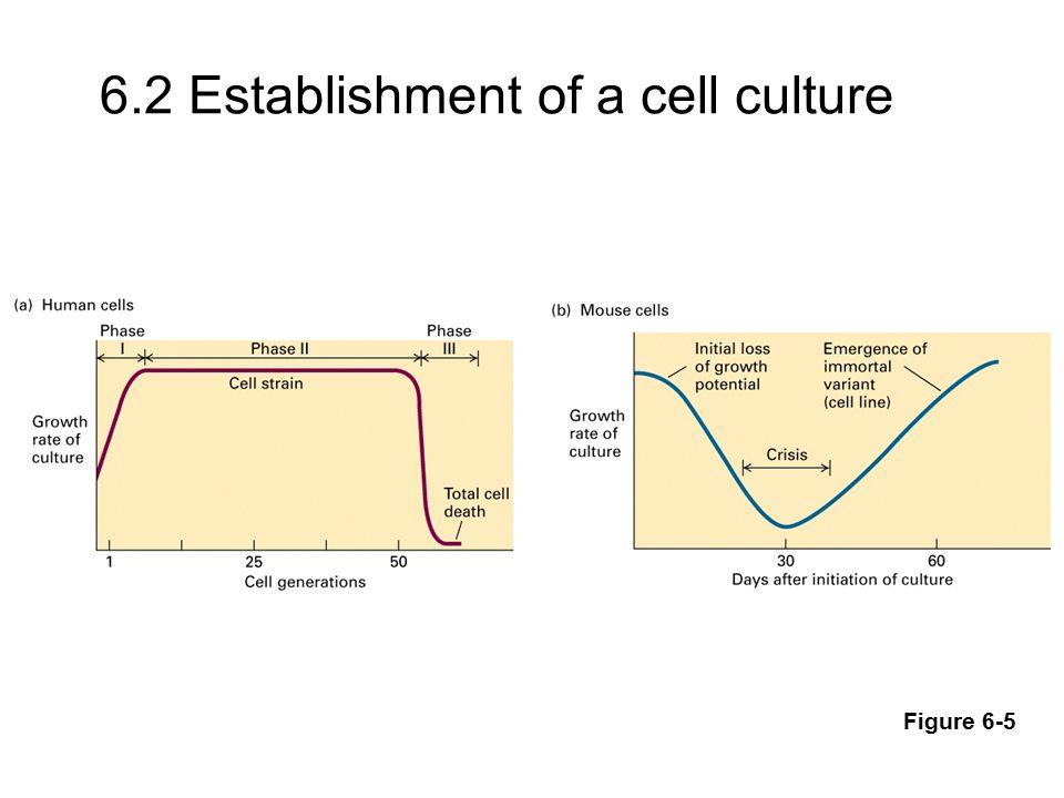 6.2 Establishment of a cell culture Figure 6-5