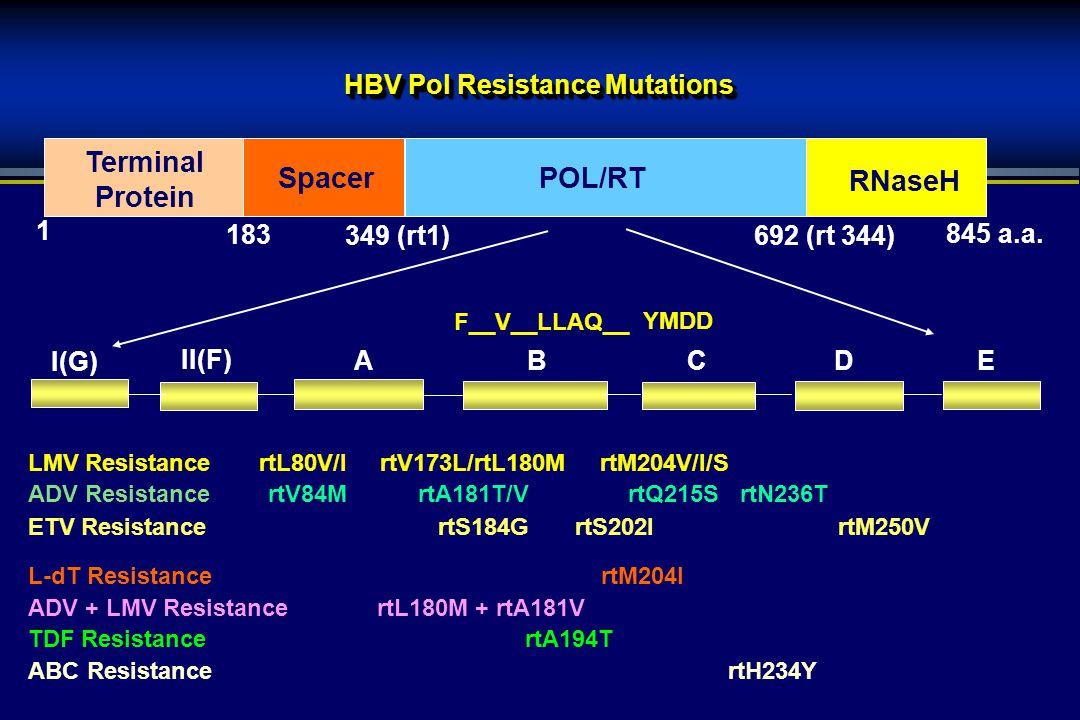 HBV Pol Resistance Mutations LMV Resistance rtL80V/I rtV173L/rtL180M rtM204V/I/S ADV ResistancertV84MrtA181T/V rtQ215S rtN236T ETV Resistance rtS184G rtS202IrtM250V L-dT Resistance rtM204I ADV + LMV Resistance rtL180M + rtA181V TDF Resistance rtA194T ABC Resistance rtH234Y 845 a.a.