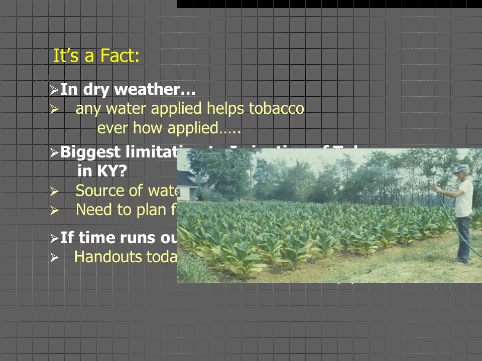 It's a Fact:  In dry weather…  any water applied helps tobacco ever how applied…..