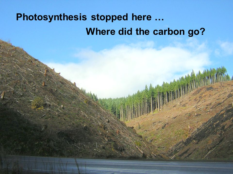 Photosynthesis stopped here … Where did the carbon go
