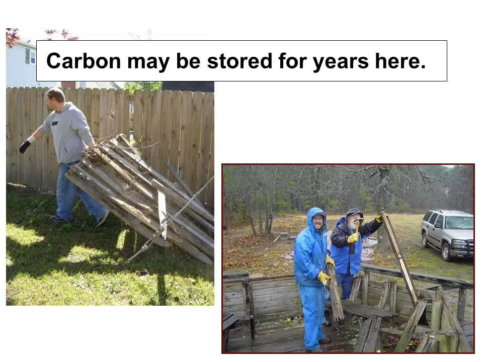 Carbon may be stored for years here.